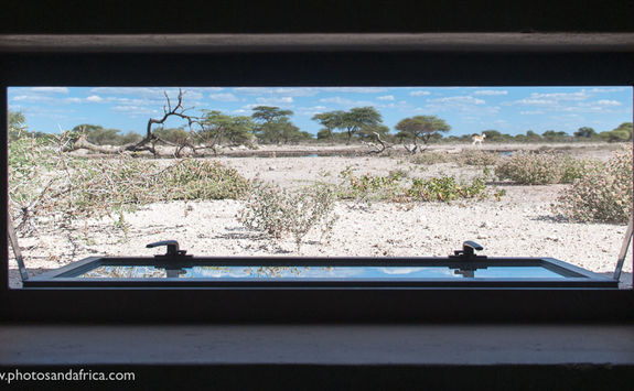 View from the Hide at Onguma