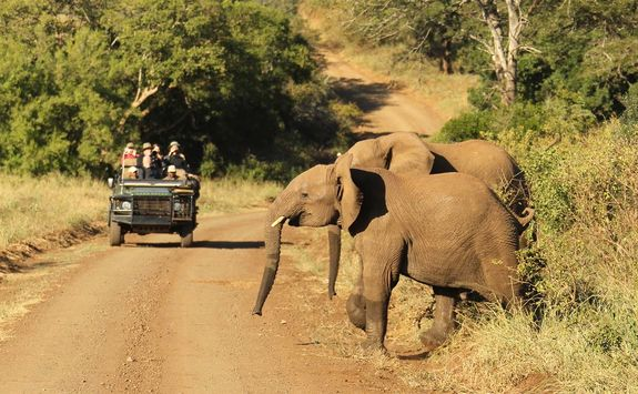 Thanda elephants
