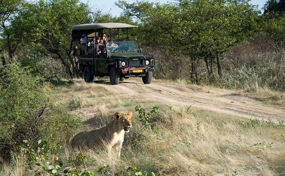 Ongava wilderness safari