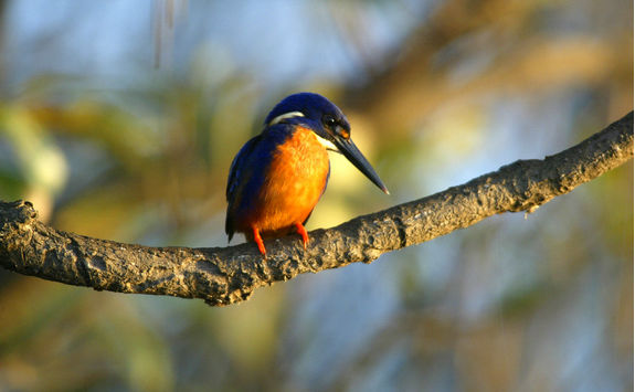 Bird in Kadaku National Park
