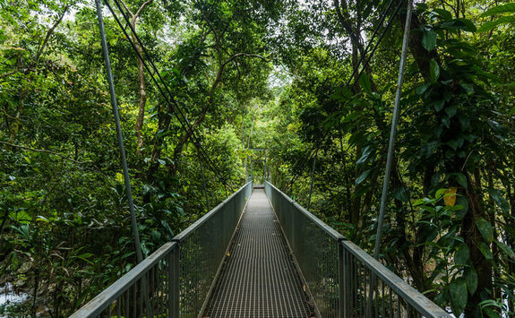 Hiking in Daintree Rainforest