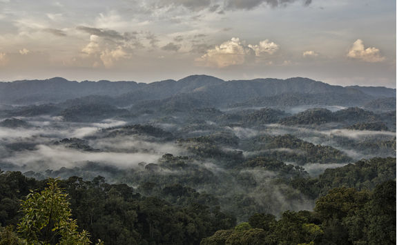 Nyungwe Forest from Above