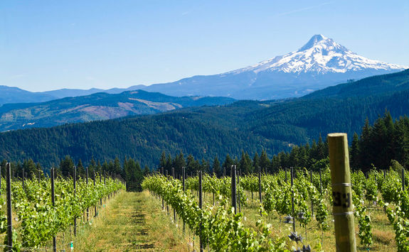 Oregon vineyard and mountain