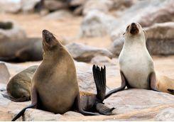 seals swakopmund