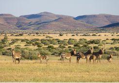 zebra damaraland
