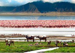 flamingos buffalo