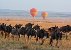 wildebeest balloons