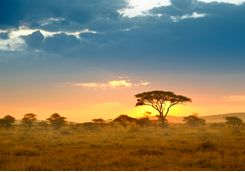 Serengeti landscape at sunset