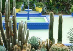 Cacti Garden in Marrakech
