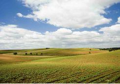 Rolling green fields