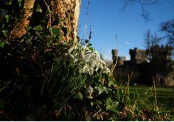 Snowdrops in the castle garden