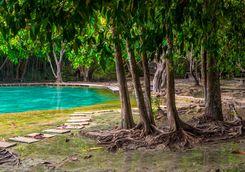 a mangrove in krabi