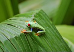 Small Frog on a Leaf