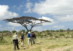 walking safari with guides