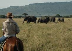 riding safari elephant