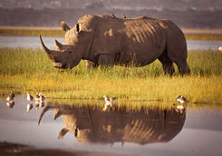 rhino lake