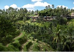 rice terraces ubud village