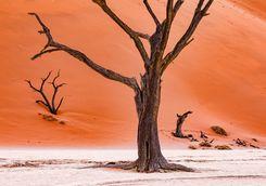 dead camel thrin trees