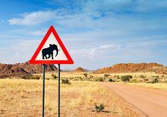 elephants crossing sign