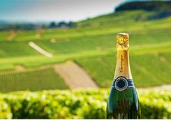 Champagne bottle in a vineyard