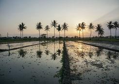 Sunset field in Yogyakarta
