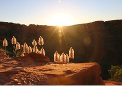 Sunrise at Canyon