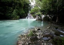 Rainforest in Sumba