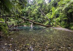 Pool in Daintree Rainforest