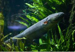 Eel underwater