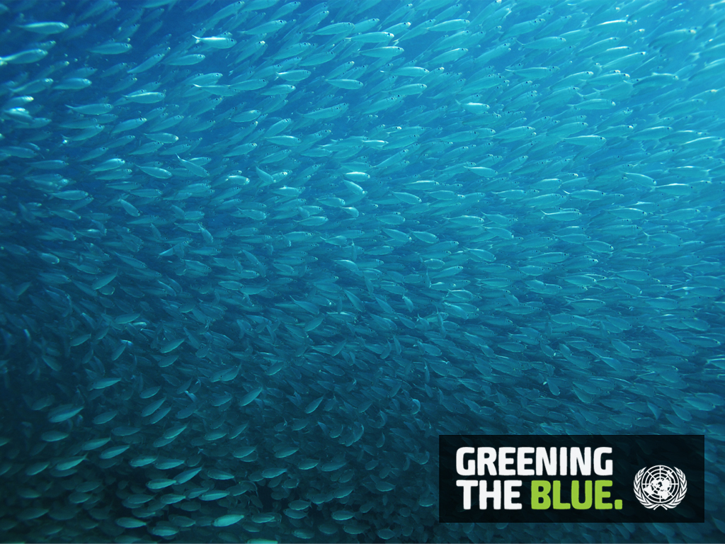 Greening the Blue Computer Wallpapers 1024 x 768 - Fish
