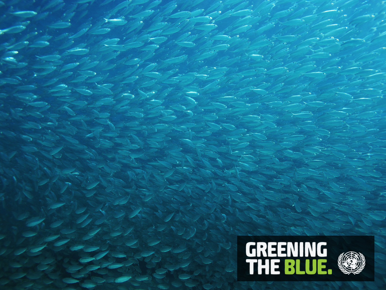 Greening the Blue Computer Wallpapers 1600-1200 - Fish