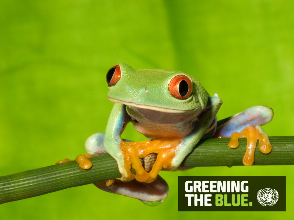Greening the Blue Computer Wallpapers 1024 x 768 - Frog