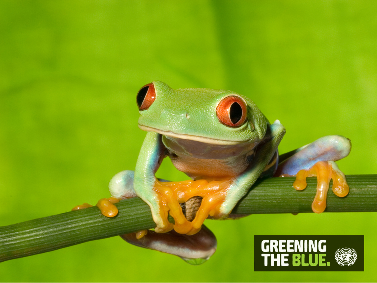 Greening the Blue Computer Wallpapers 1600 x 1200 - Frog