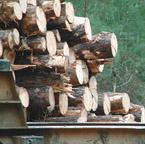 cut logs 2