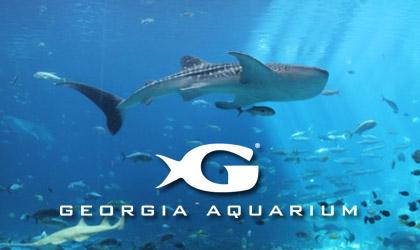 Image result for georgia aquarium