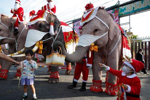 Des éléphants déguisés en père Noël distribuent des masques en Thaïlande