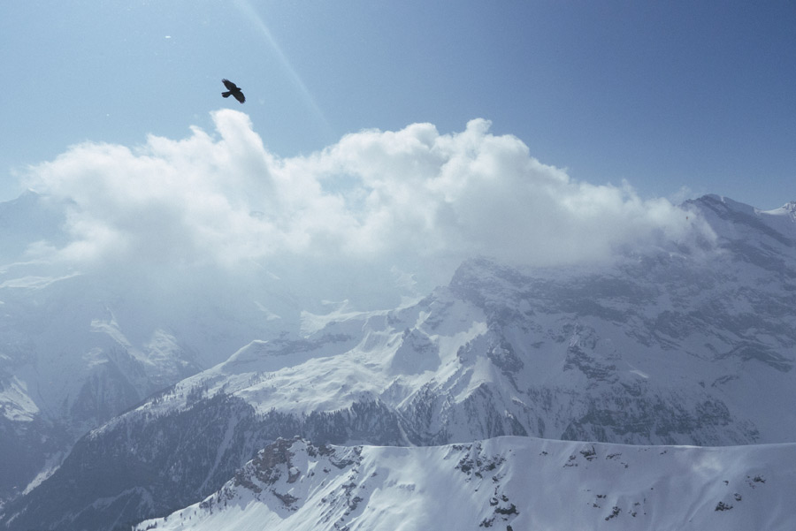 bird-flying-over-snowy-mountains