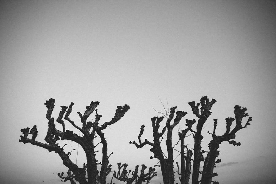 knobby-tree-geneva-switzerland