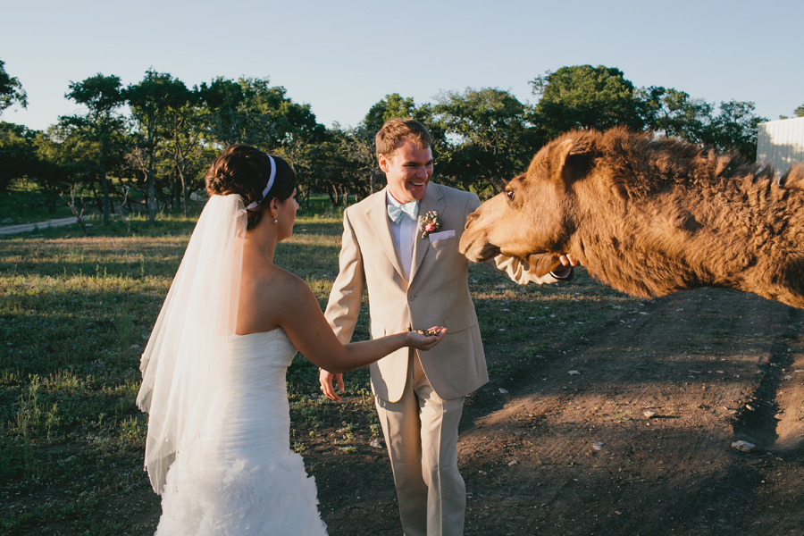 wedding-with-camels