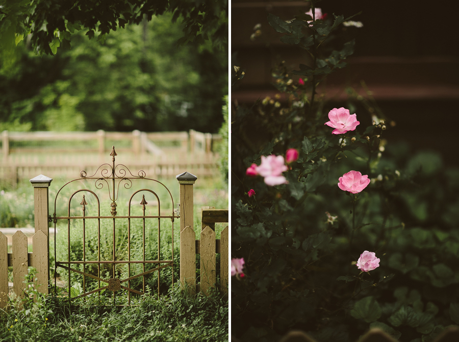 garden-gate-and-pink-roses
