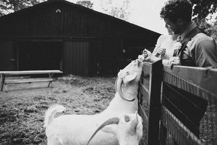 groom-feeding-goat
