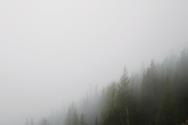 foggy-mountain-trees