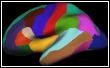 Inflated surface, DKT atlas