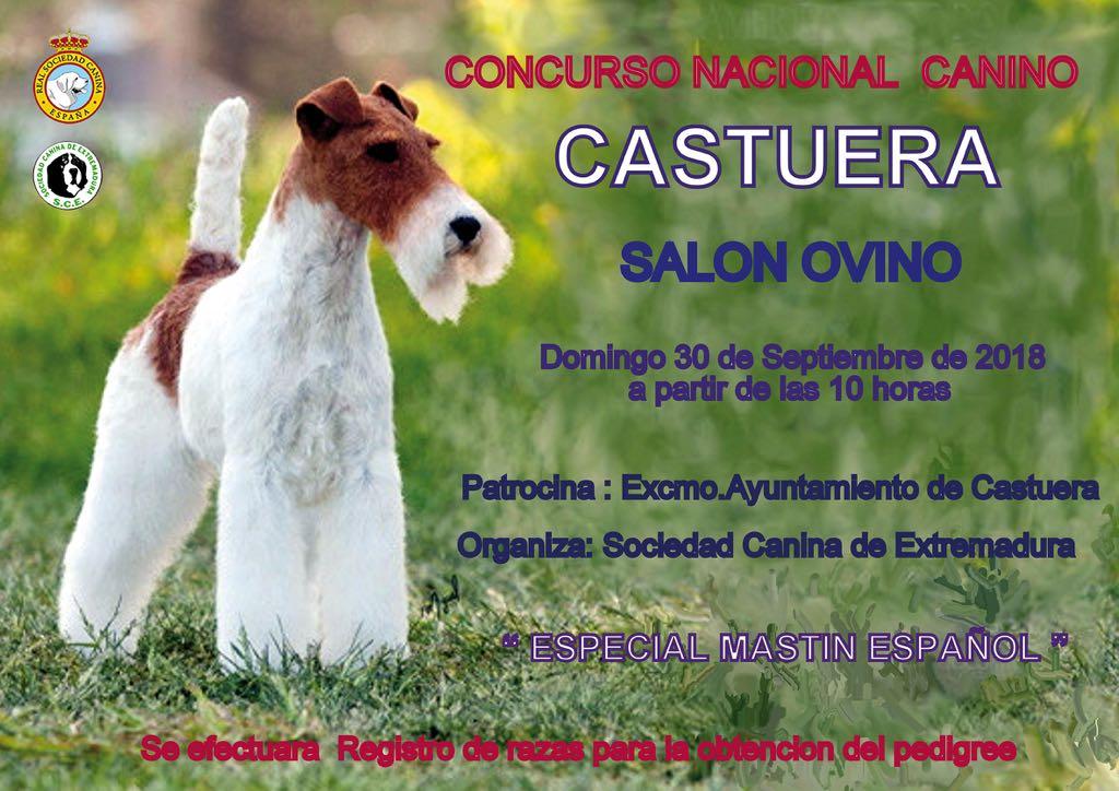Concurso Nacional Canino Castuera