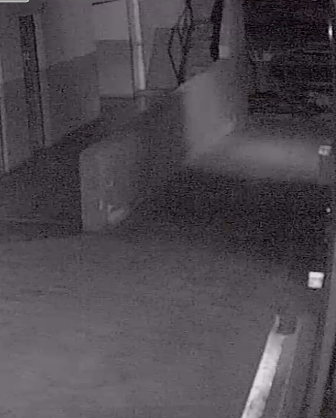 CCTV cameras showing white dots/specks at night - General Digital