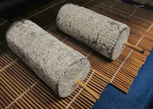 cheeses at about 2-3 weeks.  Note the dried rippled surface typical of geotrichum and its drying effects.