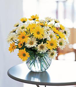 Daisy Bubble Bowl Floral Arrangement