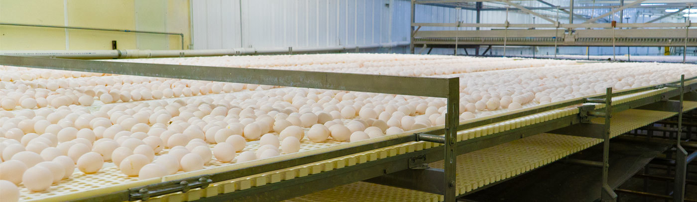 How center fresh egg farm is recovering product and turning it into profits banner