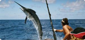 Buy Penn Fishing Reels International Shipping