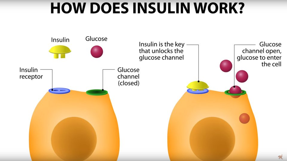 What insulin does 2.jpg